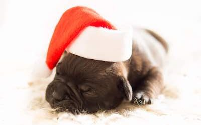 How to enjoy Christmas with your dog