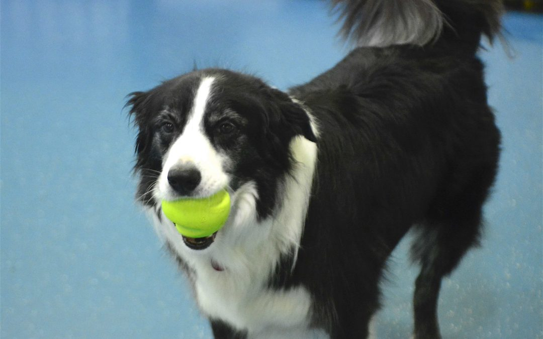 Does your dog love to chew on a tennis ball?