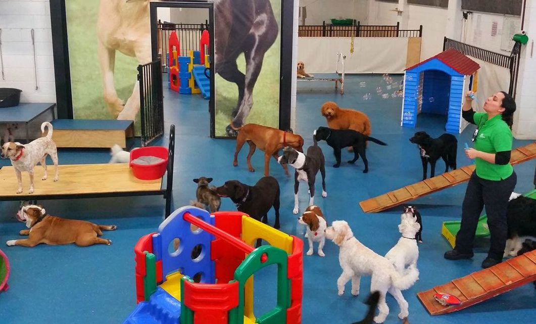 Adelaide's first and best doggy daycare