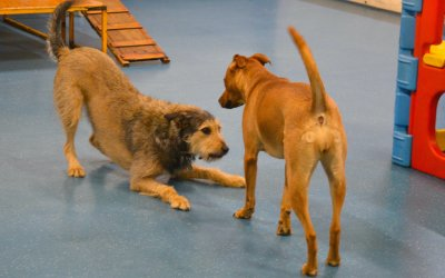 Understanding dogs play behaviour